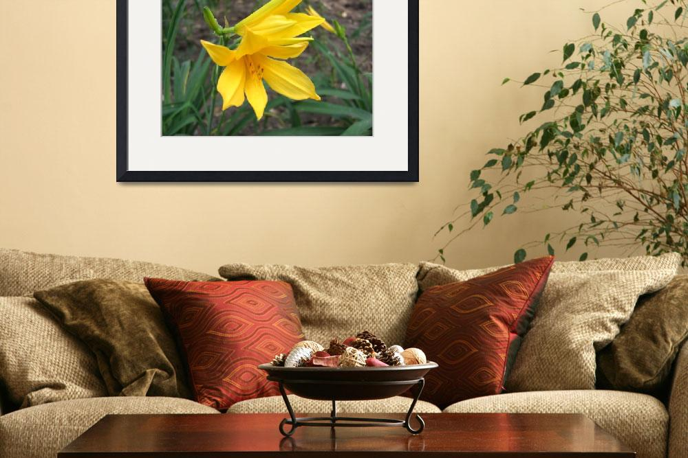"""Yellow Daylily 3""  (2009) by ChristopherInMexico"