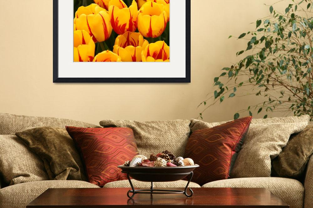 """""""""""Tulips in Waiting""""&quot  (2008) by Martha"""