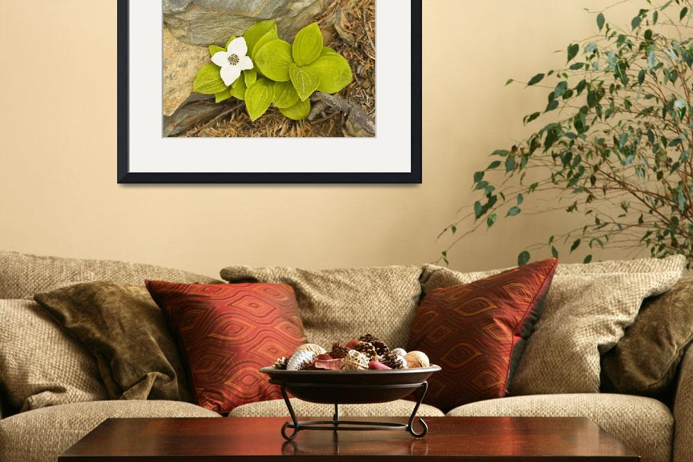 """Close up of Dwarf Dogwood at Lowell Point near Sew&quot  by DesignPics"