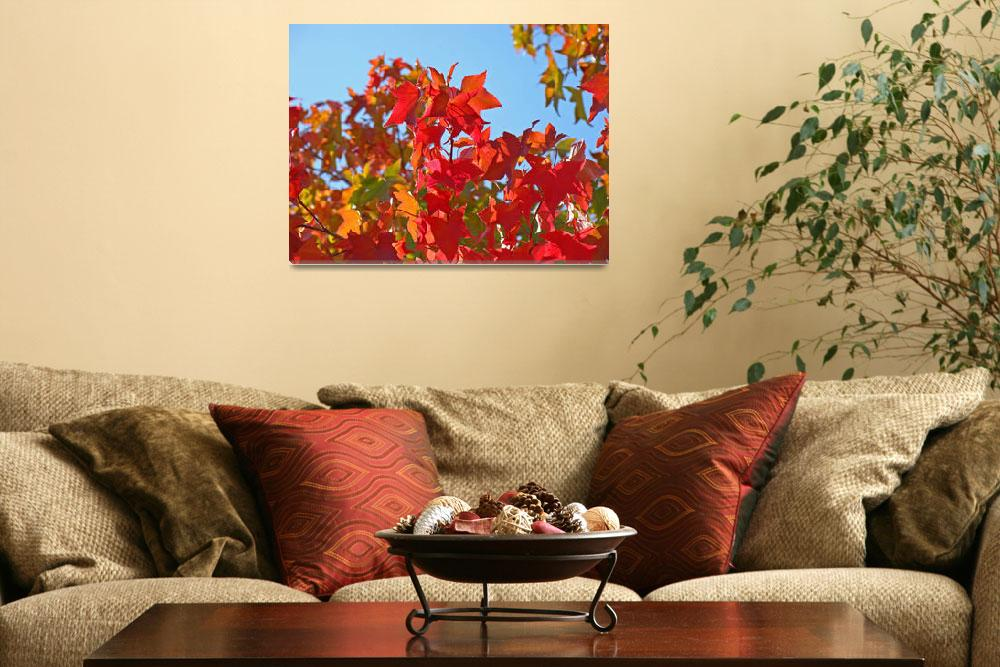 """AUTUMN LANDSCAPE Fall Art Red Leaves Blue Sky&quot  (2009) by BasleeTroutman"