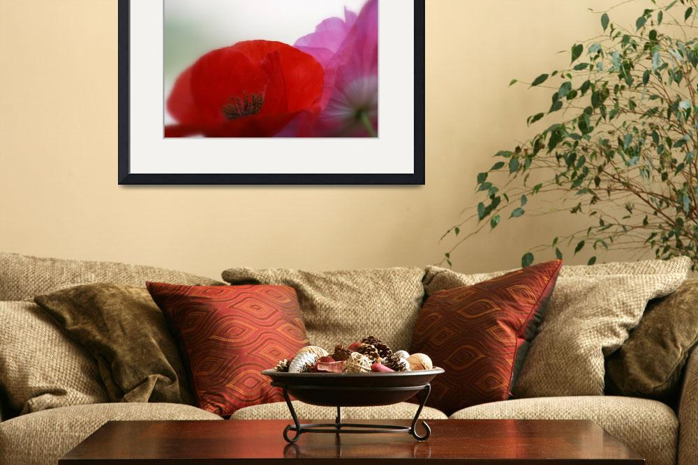 """""""Poppy passion&quot  by lynne_b"""