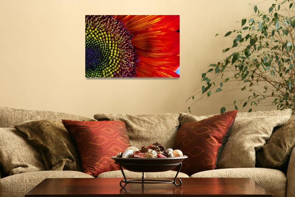 """""""Sunflower """"Rainbow Bright""""&quot  (2012) by SoulfulPhotos"""