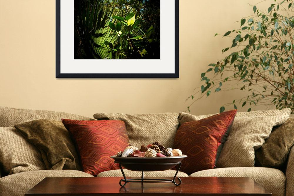 """""""Tropical Foliage&quot  (2008) by ChrisCrowley"""