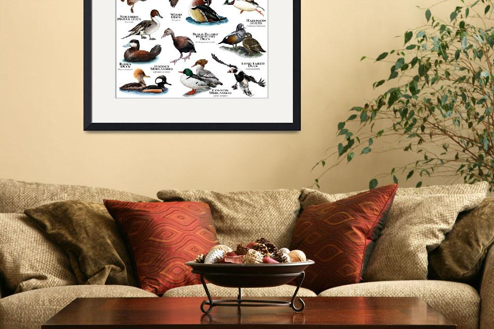 """""""Ducks of North America&quot  by inkart"""