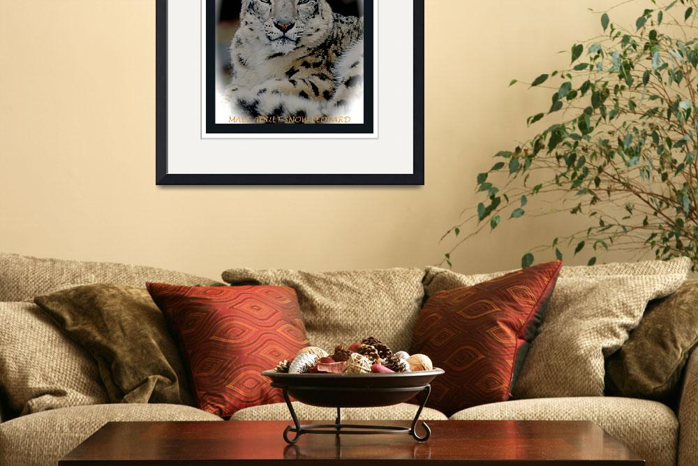 """""""ADULT MALE SNOW LEOPARD&quot  (1998) by frankreggio"""