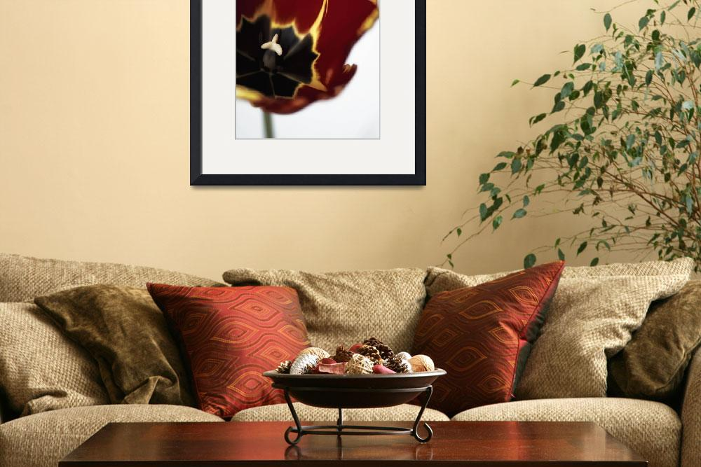 """""""red tulip&quot  (2012) by JulieScholz"""