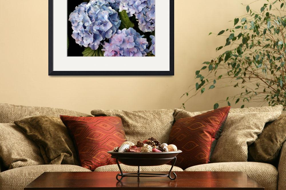 """Hydrangea&quot  (2010) by lillisphotography"