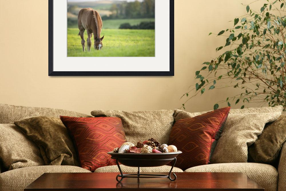 """""""Horse in field in county Wexford, Ireland&quot  by IanMiddletonphotography"""