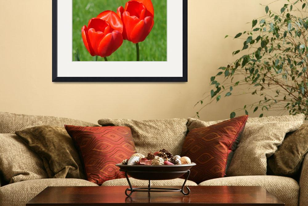 """""""Tulips Done 2 Perfection""""  (2008) by robvena"""