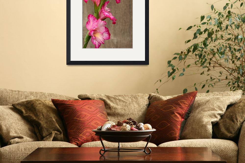 """Gladiola Grunge&quot  (2013) by LightHeart"