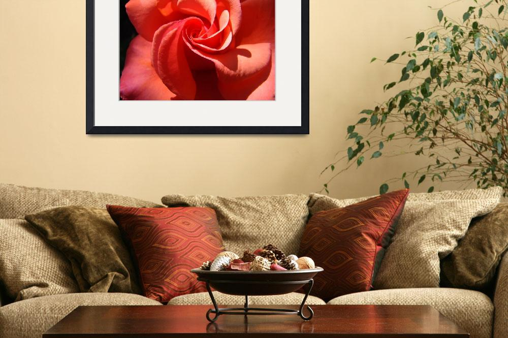"""""""OFFICE ART ROSES Orange Rose Flowers Baslee&quot  (2009) by BasleeTroutman"""