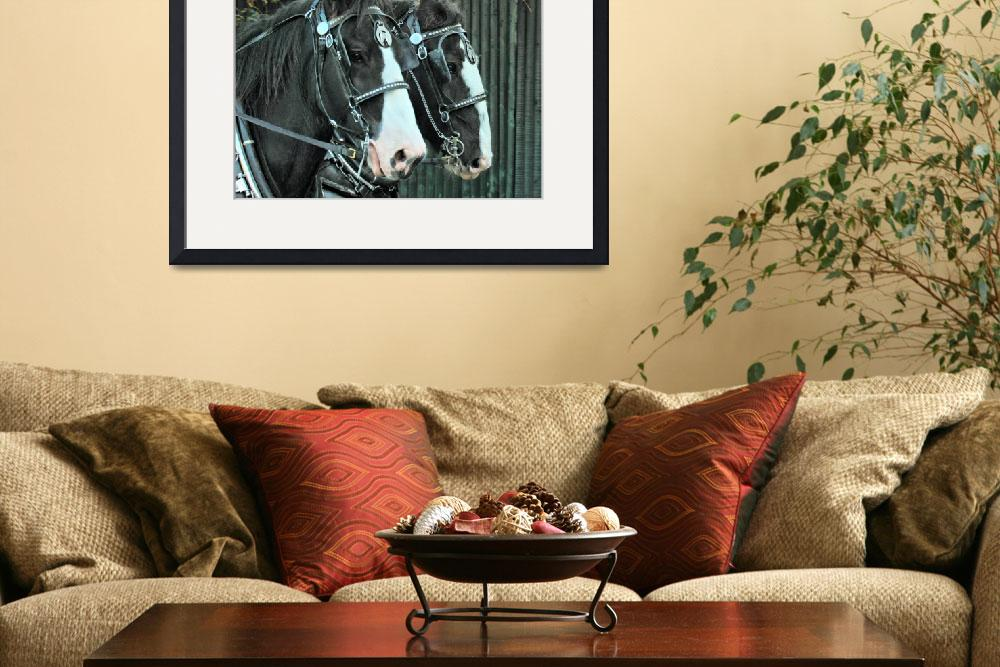 """Carriage Horses&quot  (2013) by Photostahre"
