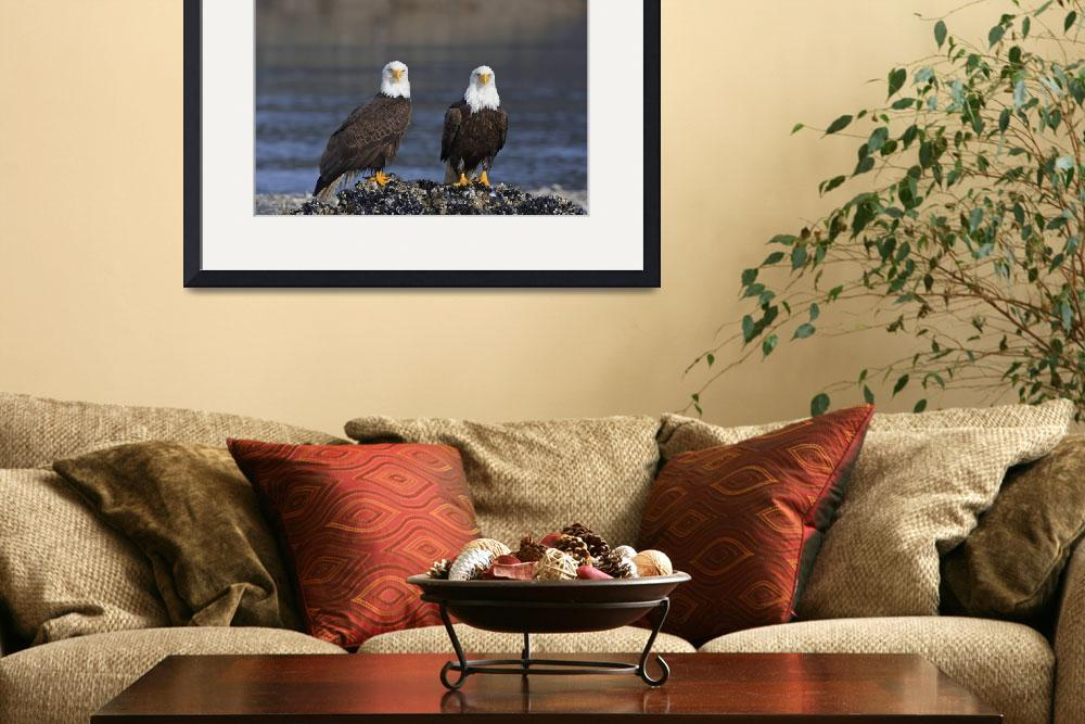 """""""Bald Eagles Perched On Barnacle Covered Rock Insid""""  by DesignPics"""