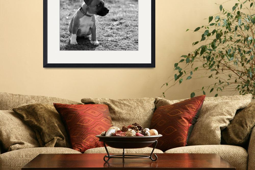 """""""Staffordshire Bull-Terrier Puppy&quot  (2012) by ImageMonkey"""