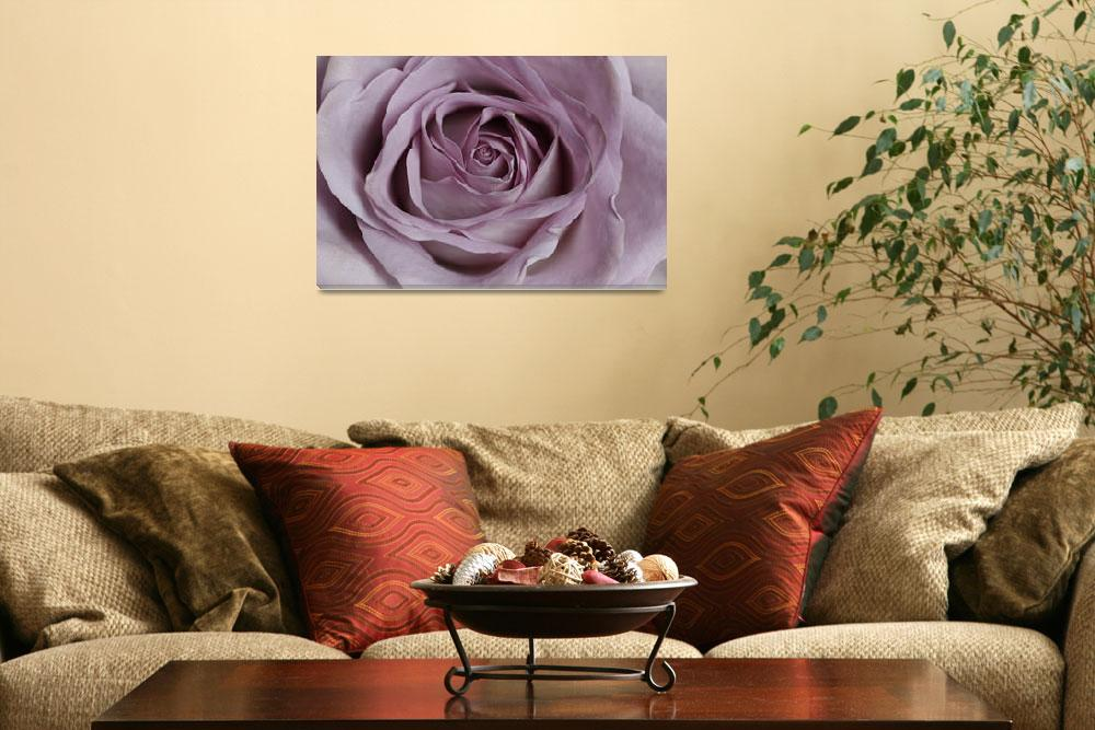 """""""LILAC ROSE""""  (2012) by edesigns15"""