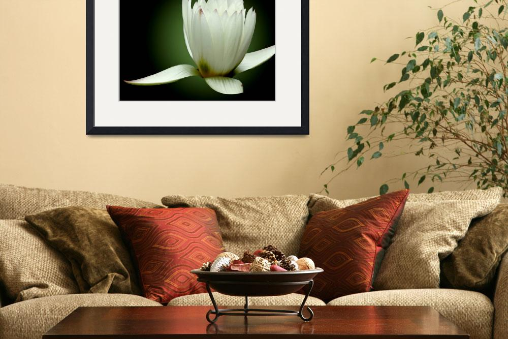 """""""White Water Lily So Pure""""  (2011) by PhotographsByCarolFAustin"""