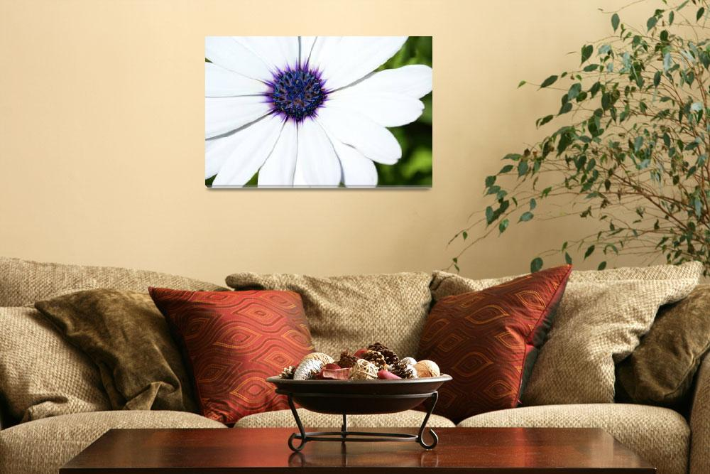 """""""White Daisy&quot  (2006) by ispyimagination"""