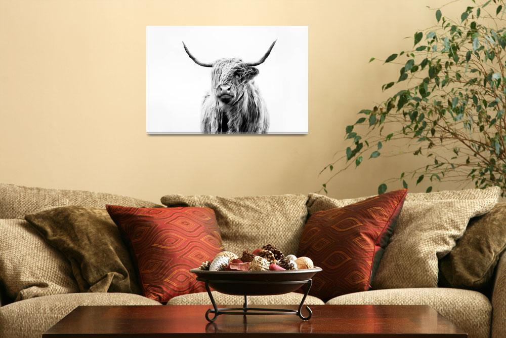"""portrait of a highland cow&quot  (2011) by doritfuhgphotography"
