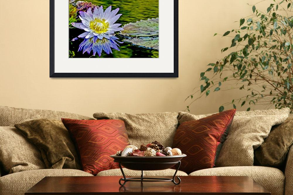 """""""Purple Flower Water Lily Pond&quot  (2010) by PhotographsByCarolFAustin"""