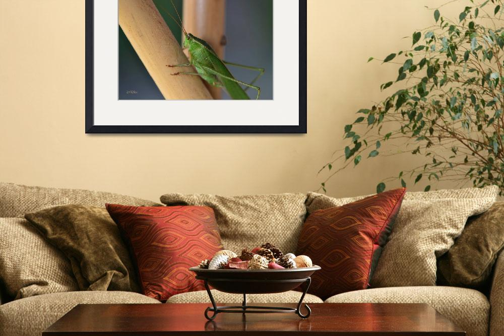 """Katydid Resting on Bamboo""  (2012) by theblueplanet"