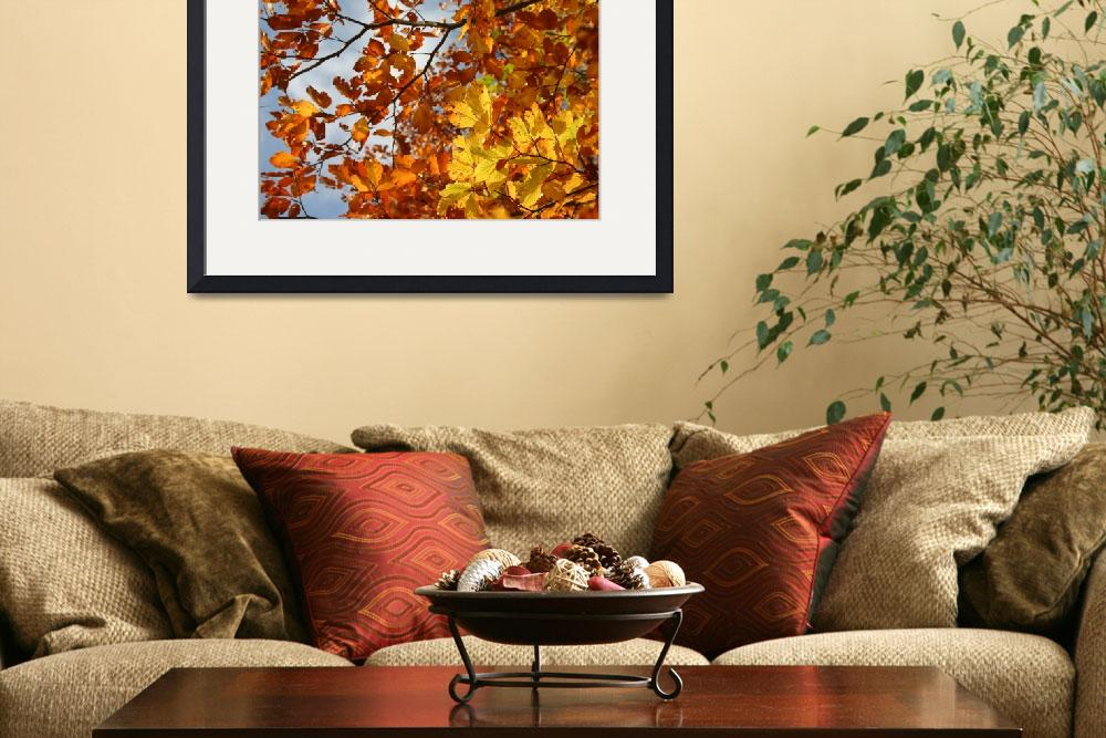 """""""Autumn leaves&quot  by xamad"""