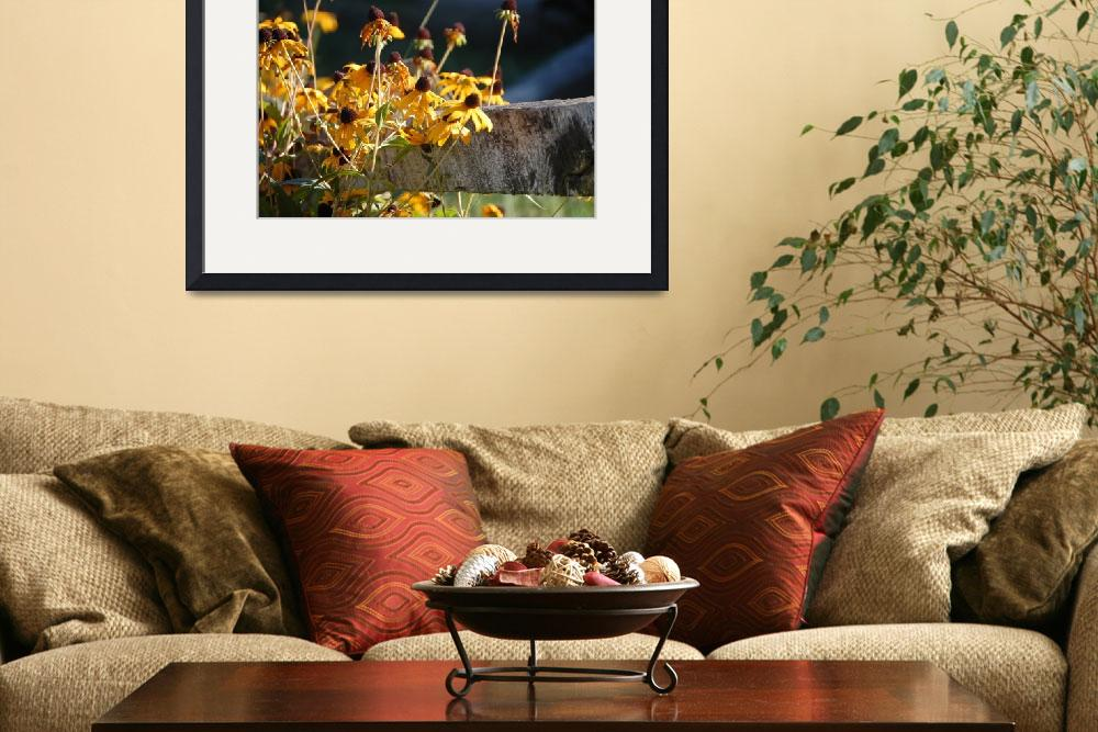 """""""black eyed Susan&quot  (2010) by imagesbyscott"""