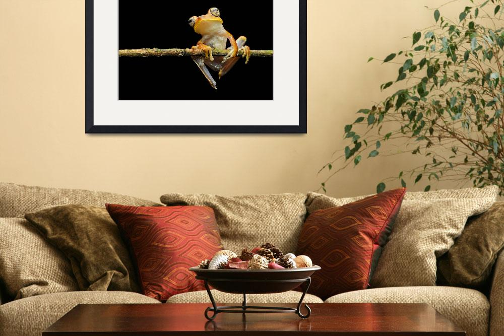 """Gunthers banded tree frog""  (2015) by GFC_Collection"