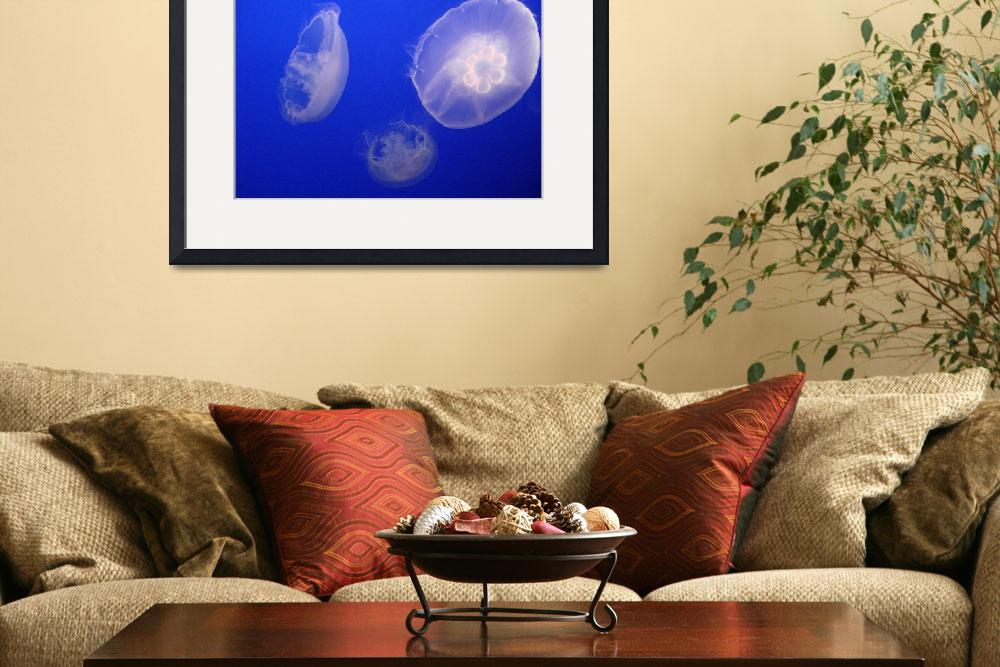 """""""Sea Life, 4""""  (2010) by brianne"""