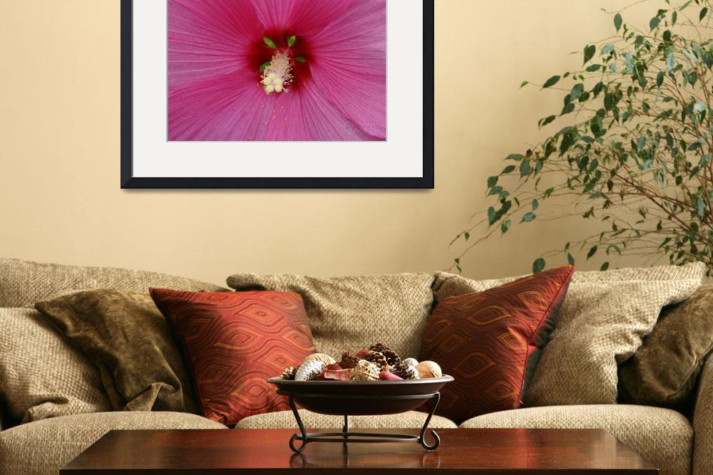 """""Pink Hibiscus""&quot  (2007) by vpardophotography"