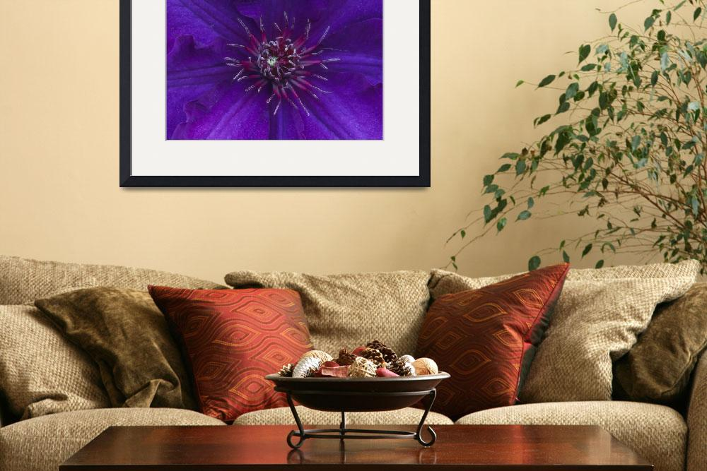 """Purple Clematis""  by TerryCrain"