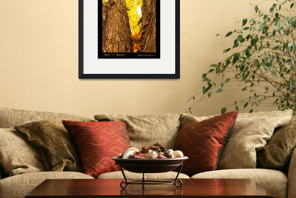 """Maple Tree Three Poster Print&quot  (2010) by lightningman"