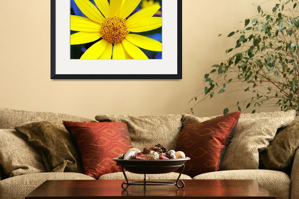 """""""Yellow Flower""""  (2010) by feagans_photography"""