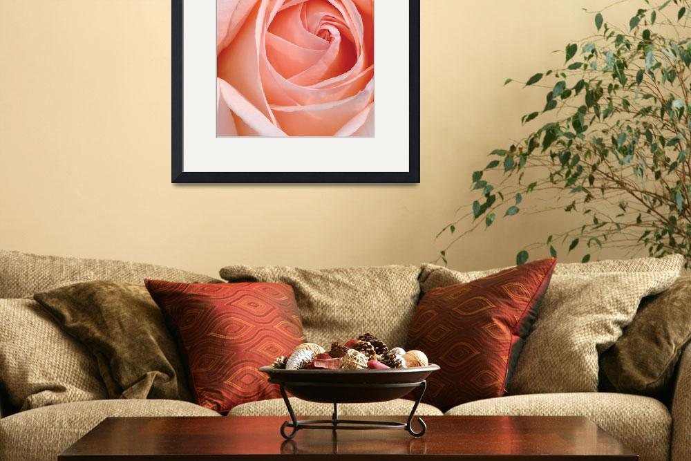 """""""Flower 001a Pink Spring Rose&quot  (2010) by Ricardos"""