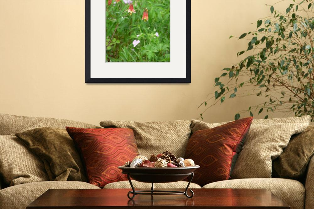 """""""Wildflowers, D. Oberle""""  (2008) by GypsyChicksPhotography"""