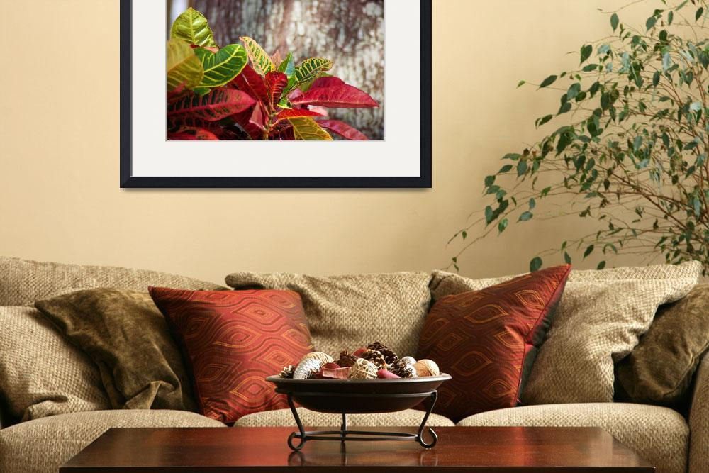 """""""Crotons&quot  (2013) by DBell"""