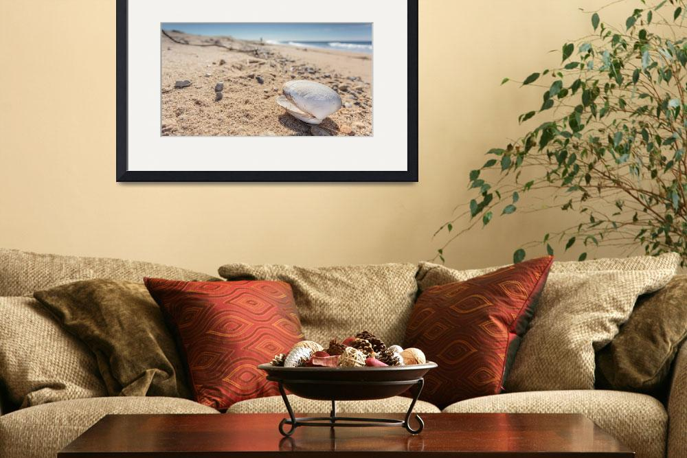 """""""Cape Cod Photography Shell on Herring Cove Beach&quot  (2015) by dapixara"""