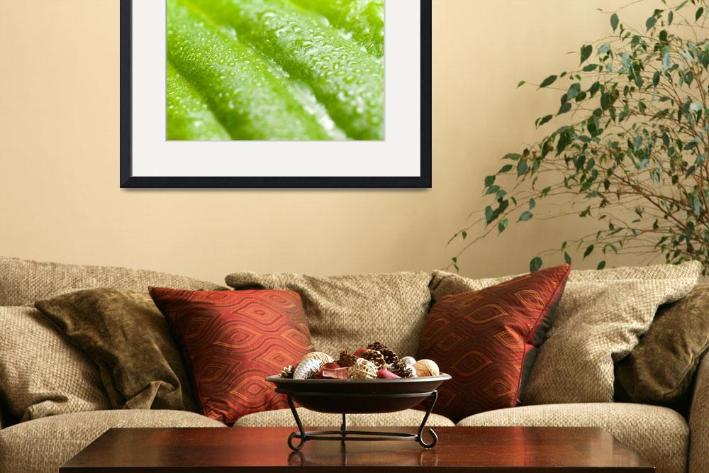 """""""Wet green leaf.&quot  by Knulp"""