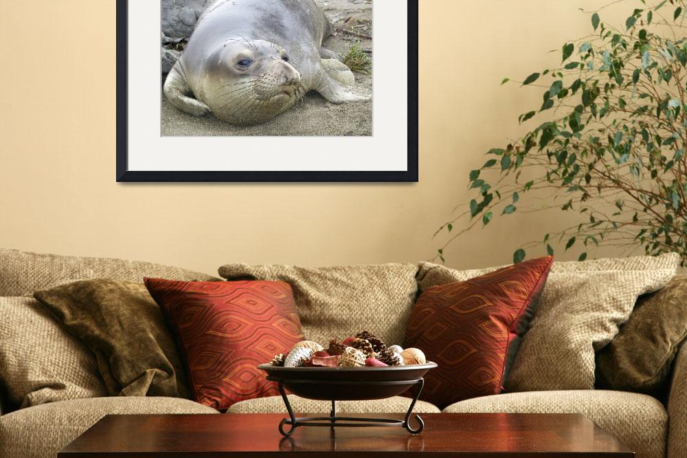 """""""Elephant Seal thoughts&quot  by eyalna"""