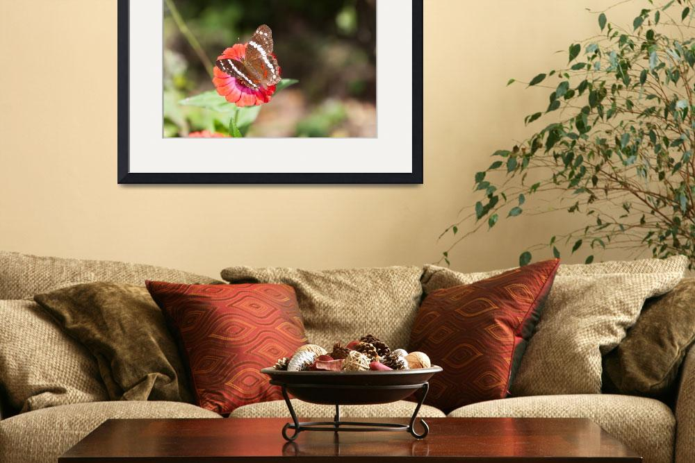"""""""Banded peacock butterfly feeding&quot  (2013) by puravidaviews"""