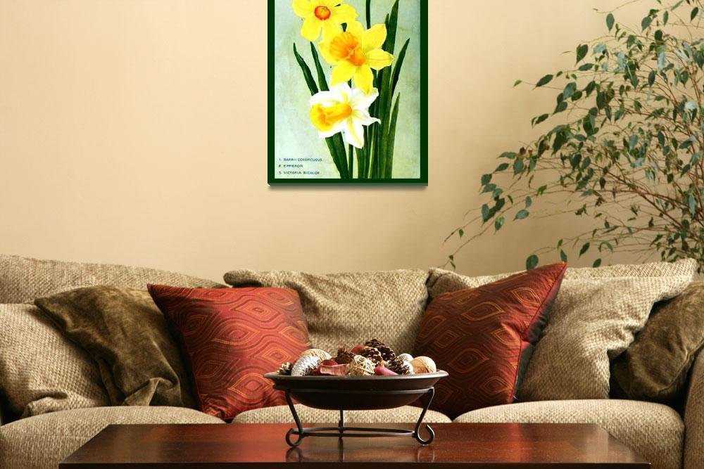 """""""Botanical Flower Daffodils Ad 1913 border&quot  (2013) by TheNorthernTerritory"""