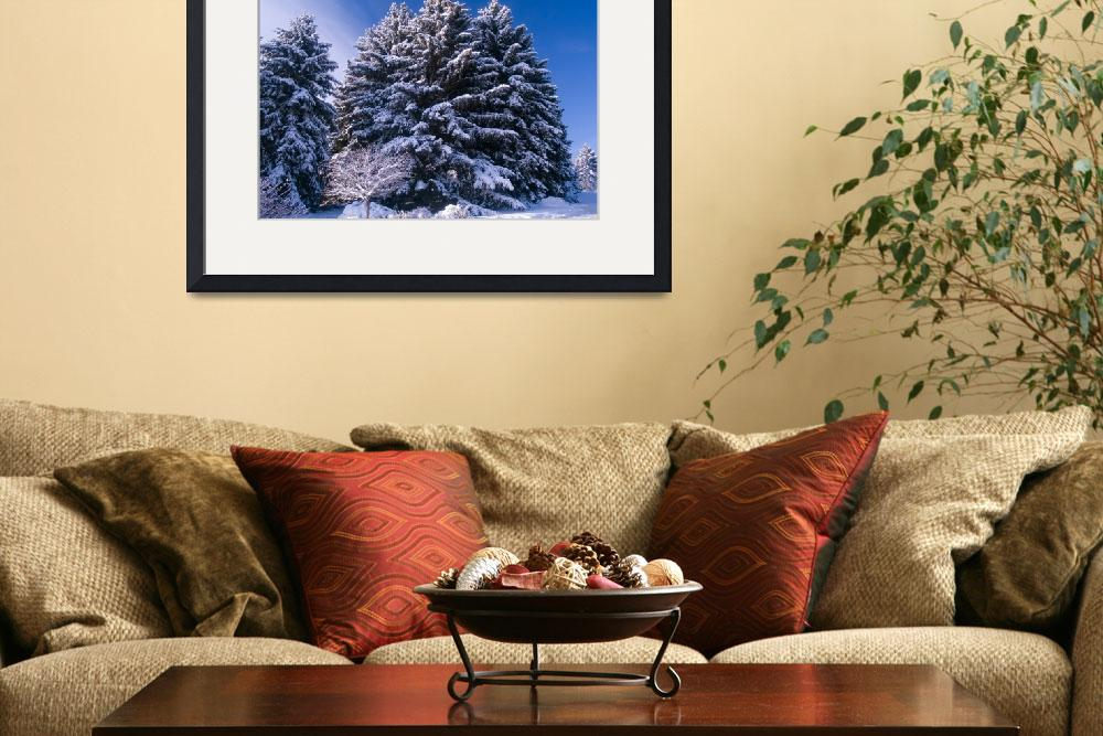 """""""Frosted Evergreens and Blue Sky&quot  (2007) by johnmclaird"""