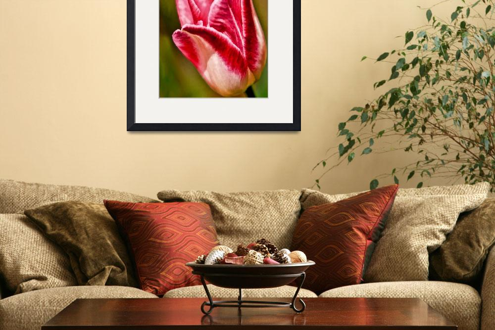 """""""Tulip Time&quot  by MikeDargaPhotography"""