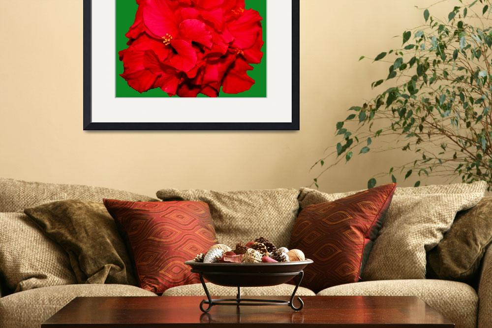 """Christmas Hibiscus&quot  (2008) by rayjacque"