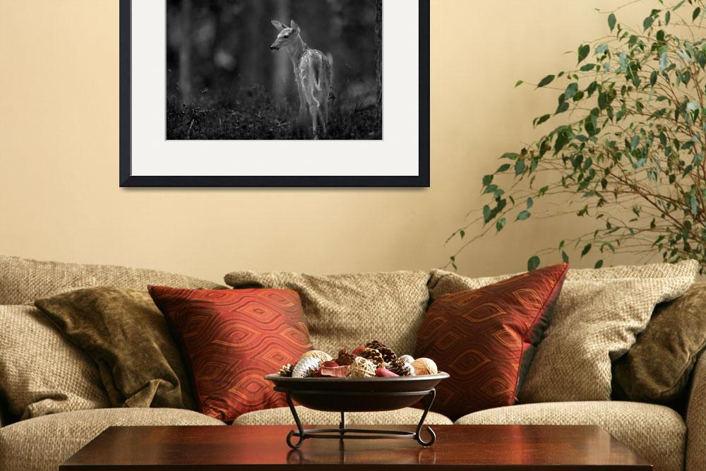"""""""Deer Fawn-Black & White Series #2&quot  by dteetor2"""