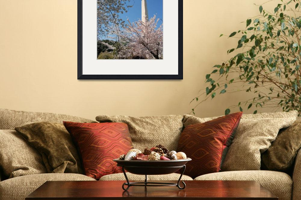 """""""Washington Monument and Cherry Blossoms""""  (2011) by phillipc81"""