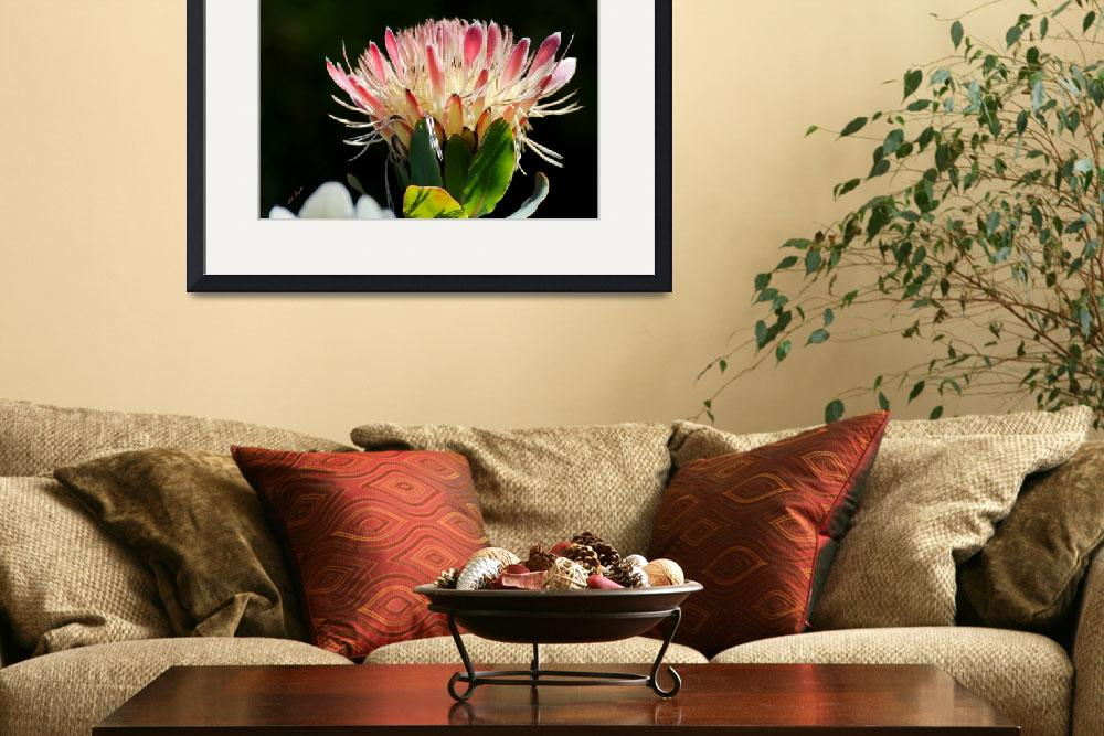 """""""Fynbos 0026&quot  by TaylorMadeArtUS"""
