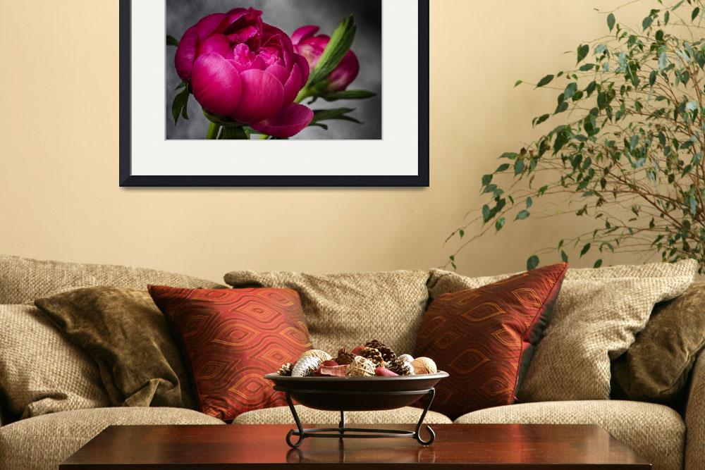 """""""Exquisite Peony&quot  (2013) by SoulfulPhotos"""
