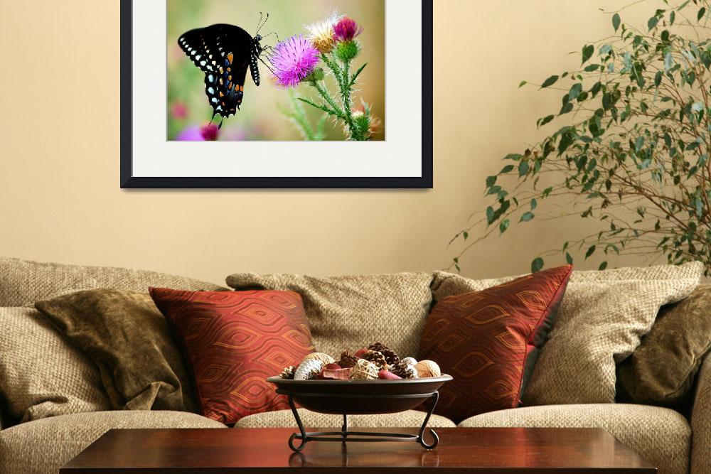 """Spicebush Swallowtail""  by turtlepathstudio"