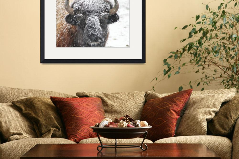 """American Buffalo 3&quot  by ScottHovind"