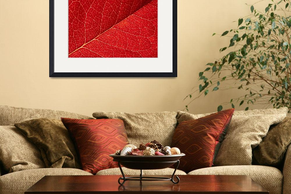 """""""red leaf abstract&quot  by kalishko"""